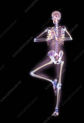 Yoga position, X-ray position