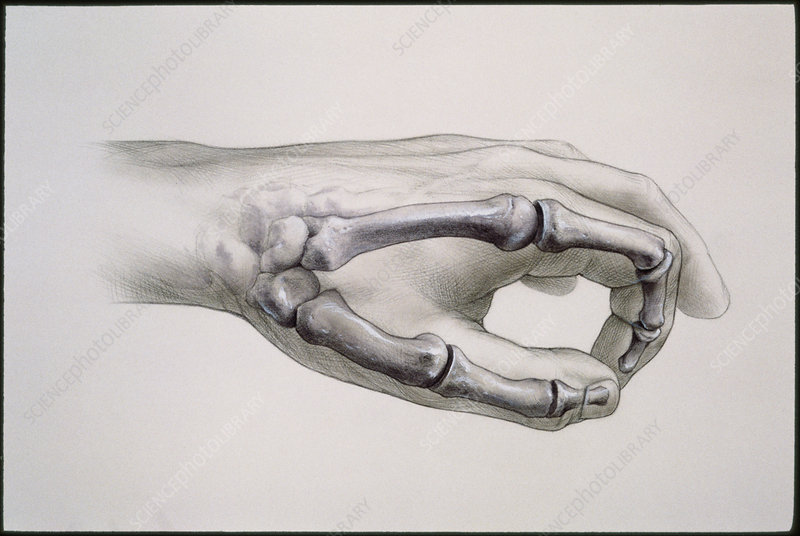 Artwork of bones in index finger and thumb