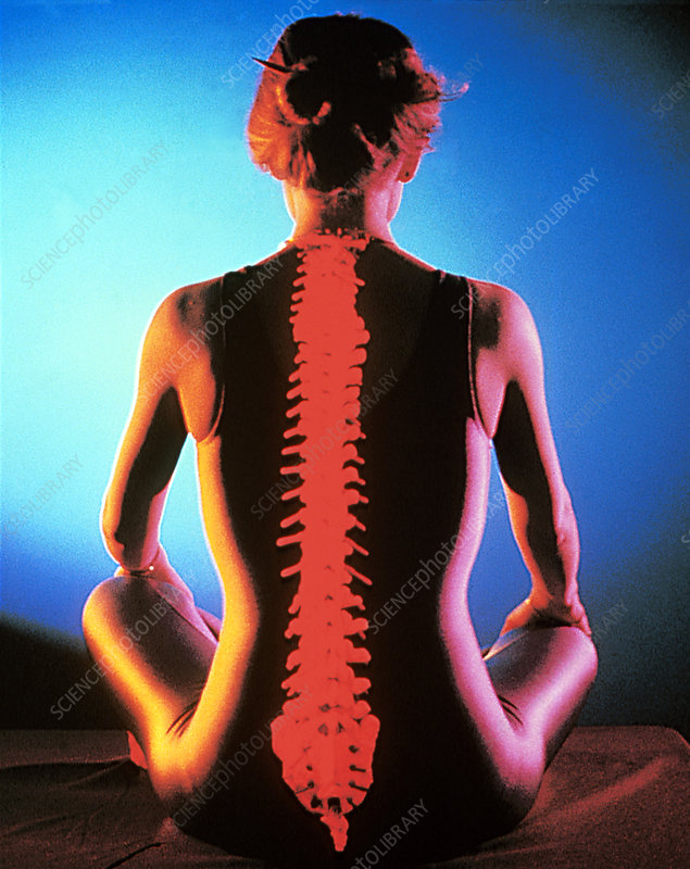 Human spine and seated woman