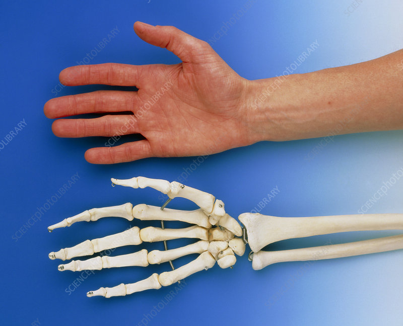 Human hand lying beside skeleton