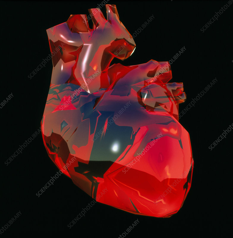 Computer artwork of human heart, abstract colours