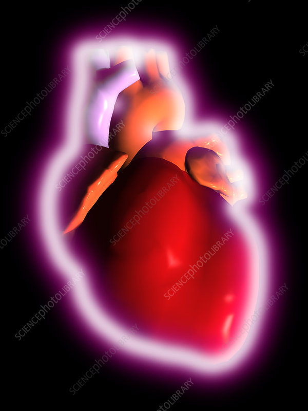 Computer artwork of a human heart, with a glow