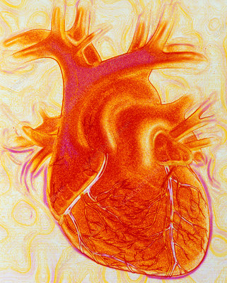 Artwork of a healthy human heart