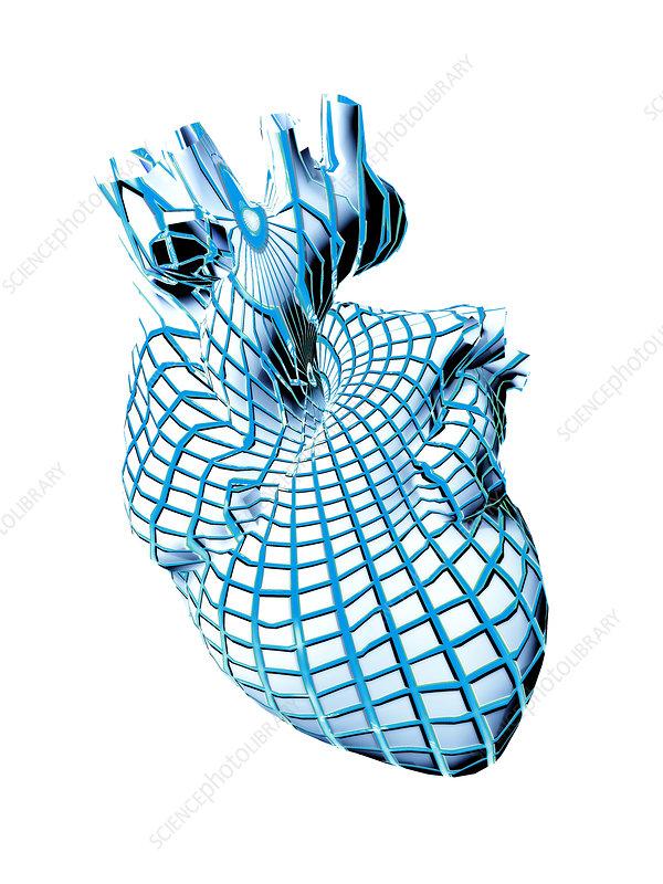 human circulatory system heart. circulatory system heart.