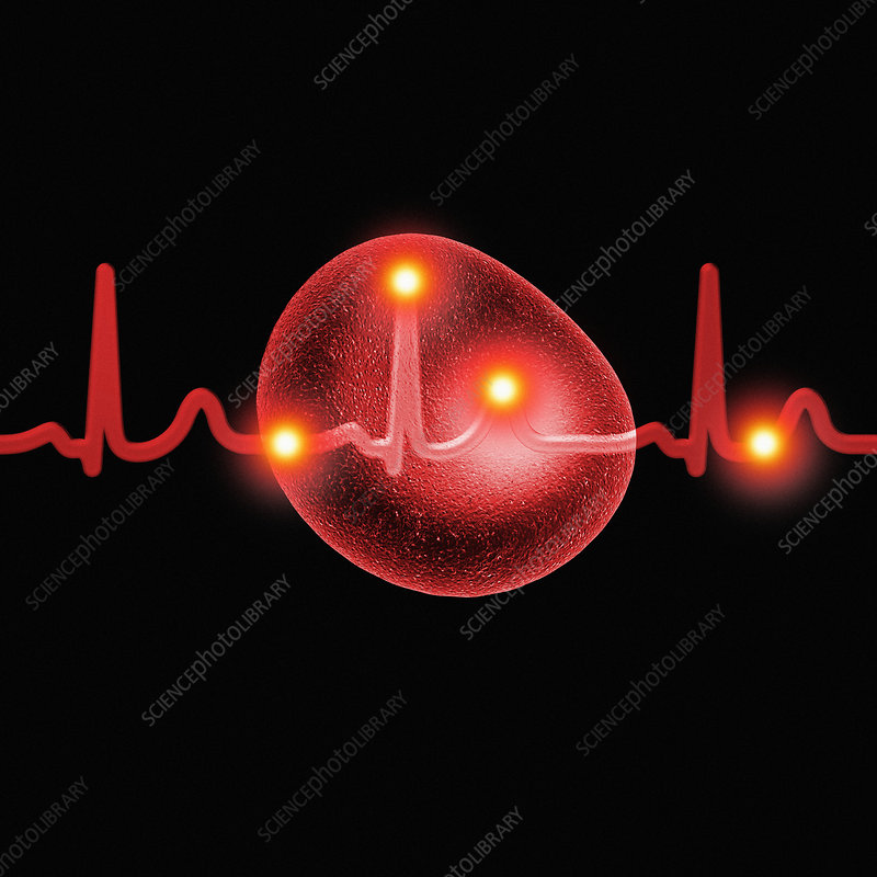 ECG and red blood cell