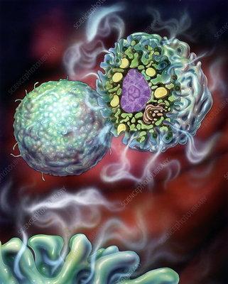 Basophil white blood cell