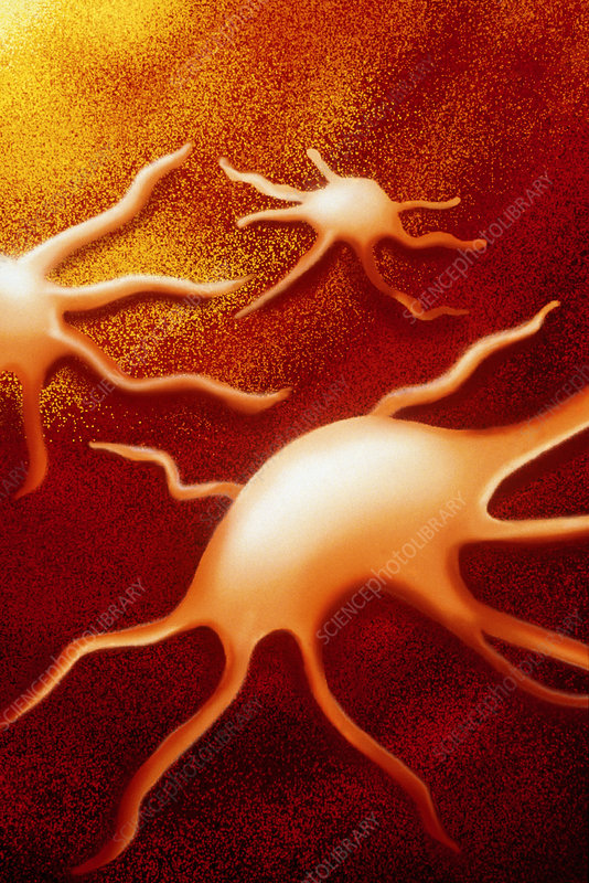 Artwork of activated platelets in a blood vessel