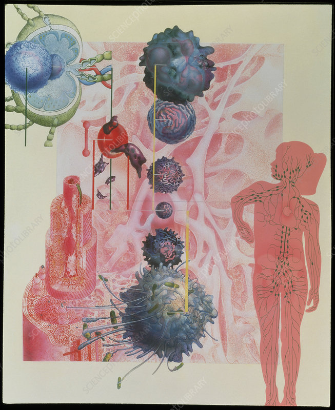 Collage artwork of cells of the immune system
