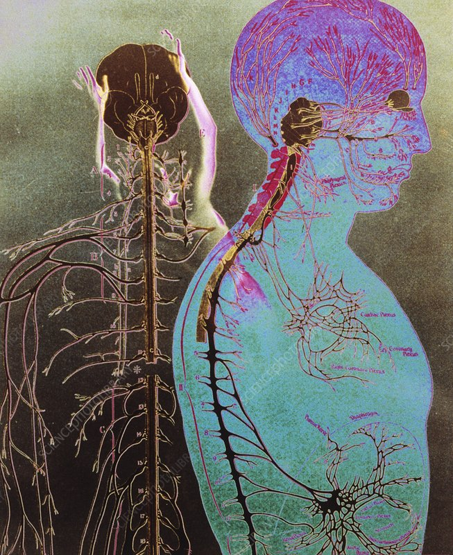 Collage illustration of the human nervous system