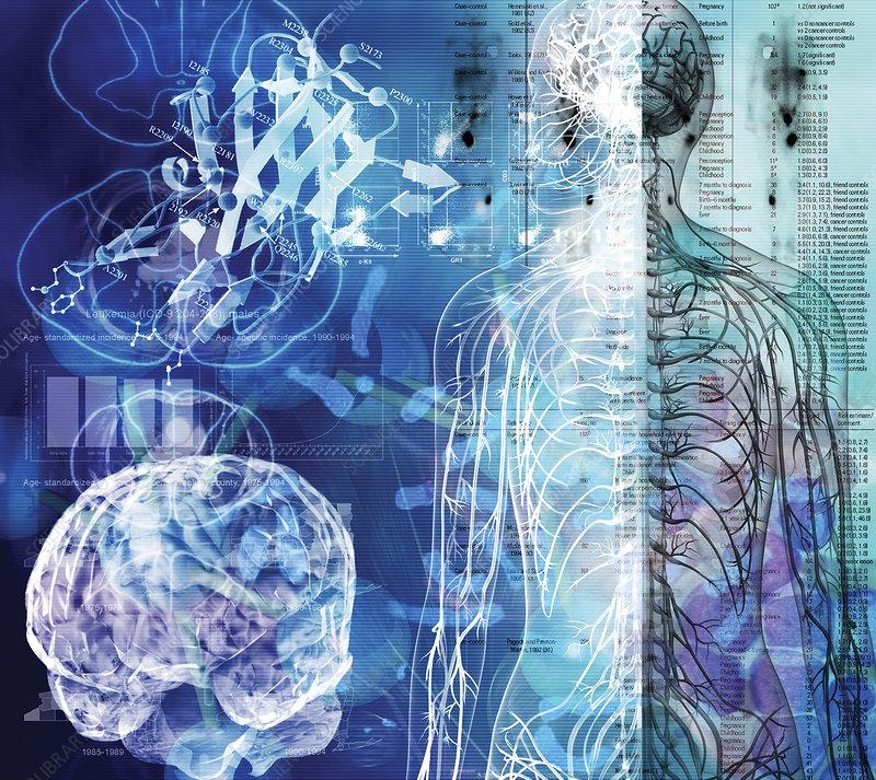Nervous system, composite image
