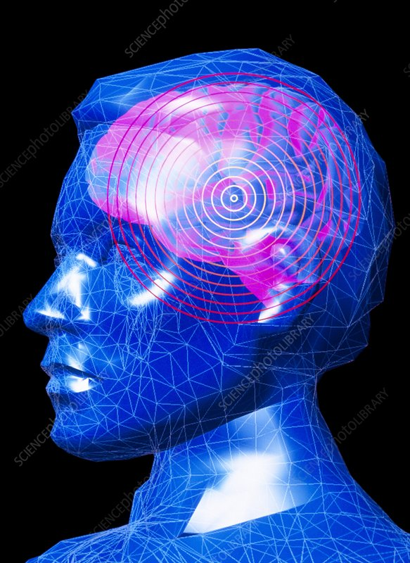 Graphic of brain in head, with concentric circles