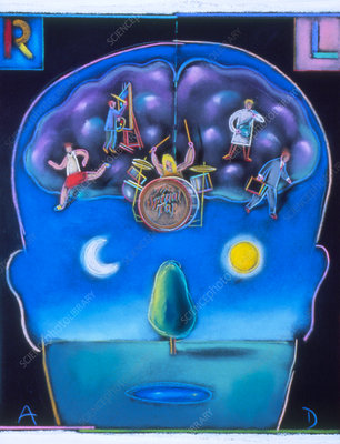 Artwork of right- & left-handedness of the brain