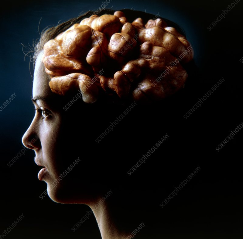 Abstract image of a girl's brain as a walnut