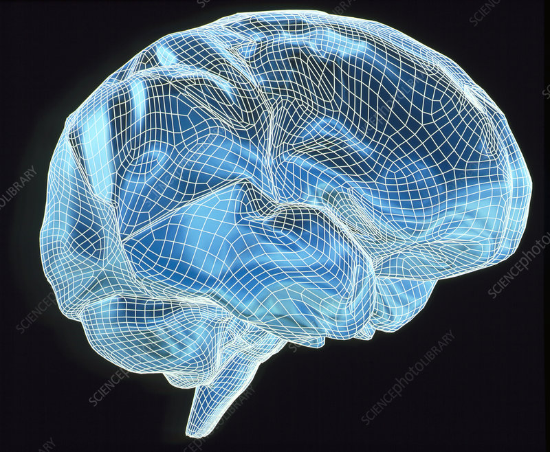 Computer Artwork Of A Wire Frame Model Brain