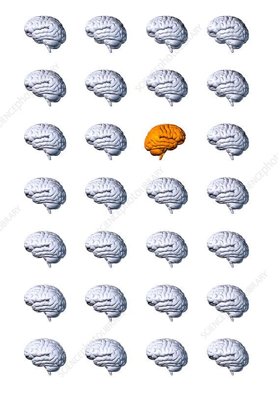 Individual brain