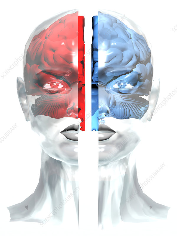 Split brain, conceptual artwork