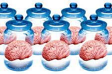 Preserved brains, artwork
