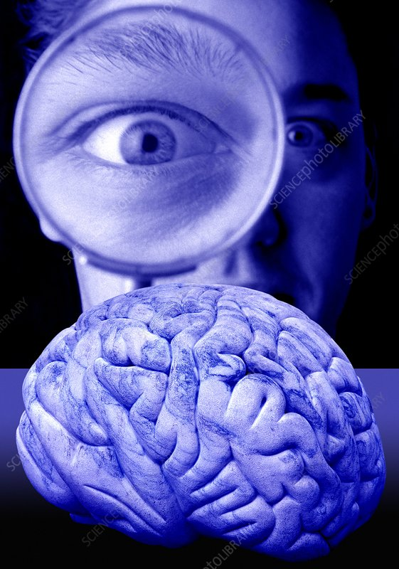Studying the brain, conceptual image
