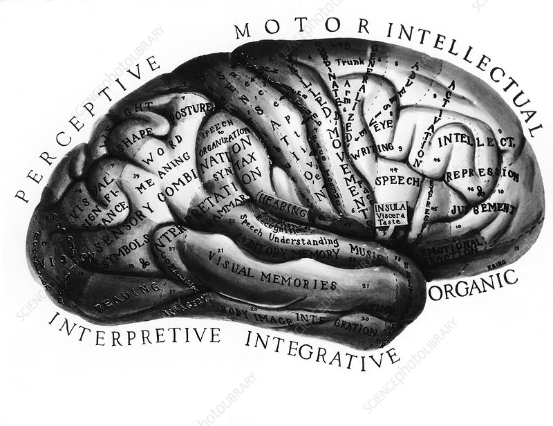 Diagram of brain functions