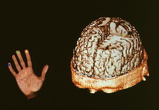 Computer image of brain-hand control from MEG scan