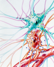 Artwork of drug transmission to brain nerve cell