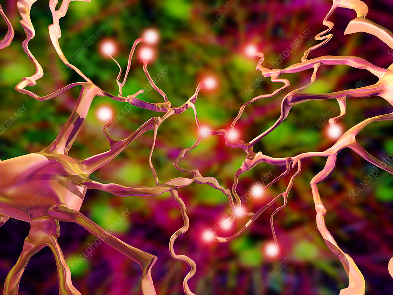Nerve cells, computer artwork