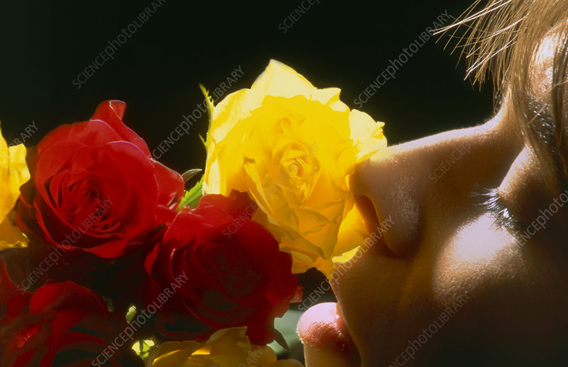 Profile of woman smelling red and yellow roses