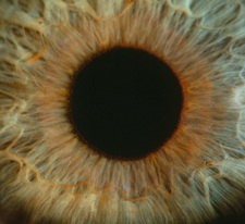 Detail of a human iris and pupil