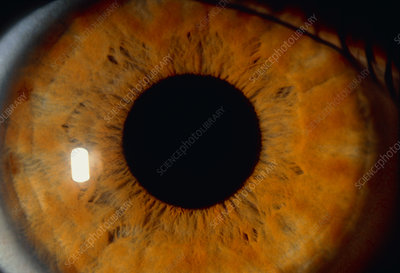 Detail of human eye