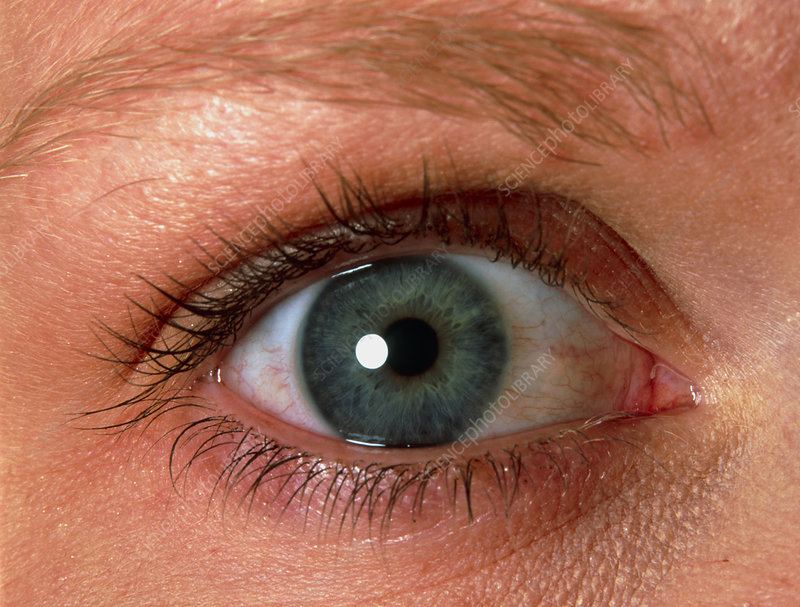 Close-up of a woman's blue eye