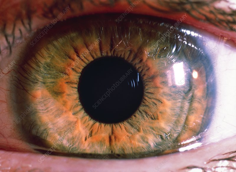 Macrophoto of a healthy, brown human eye
