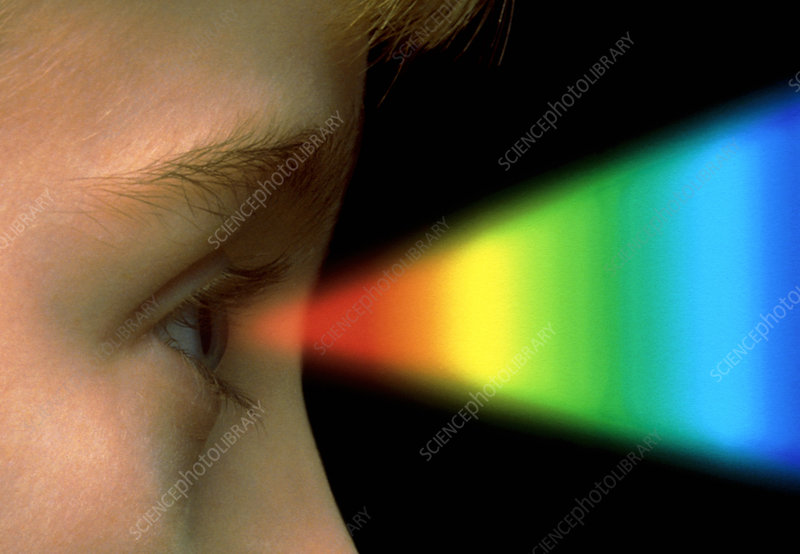 Colour vision: spectrum of light entering the eye