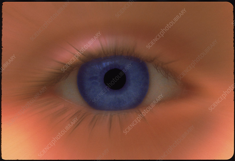 Zoom effect image of a young girl's blue eye