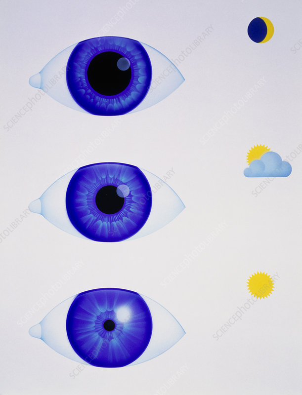 Artwork showing the pupil of eye in varying light
