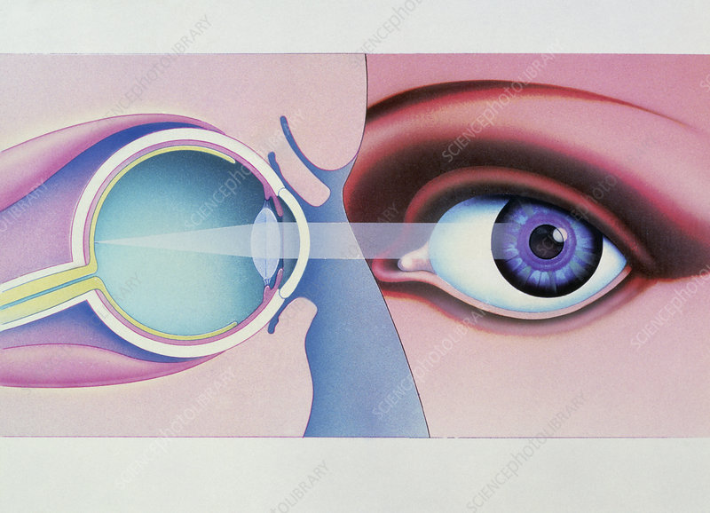 Artwork of human eye in front view and in section