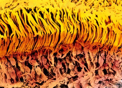 Coloured SEM of a section through the human retina