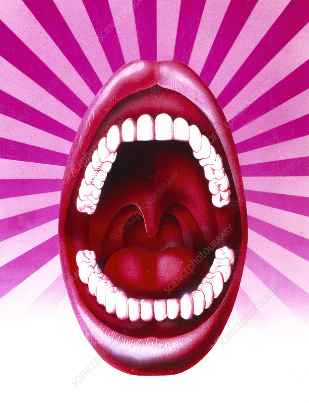 Artwork of open mouth showing set of healthy teeth