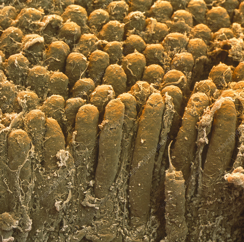 www.sciencephoto.com