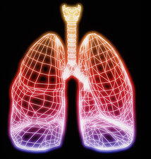 Computer artwork of healthy human lung outline