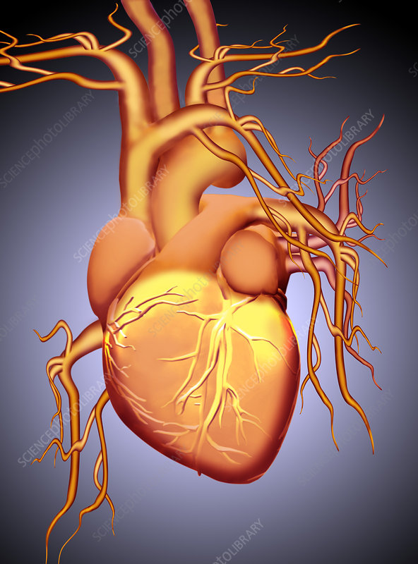Graphic Illustration of a Heart