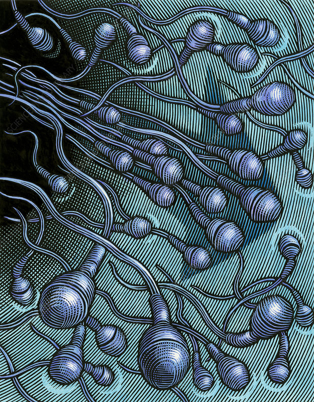 Human sperm cells, artwork