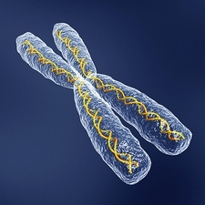 Chromosome with DNA