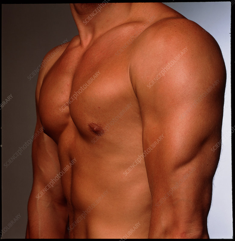 Naked torso of athletic young man