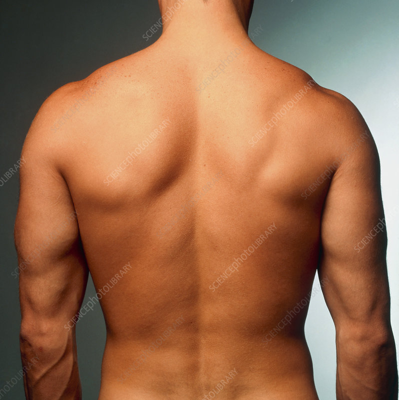 Naked torso (back view) of an athletic young man
