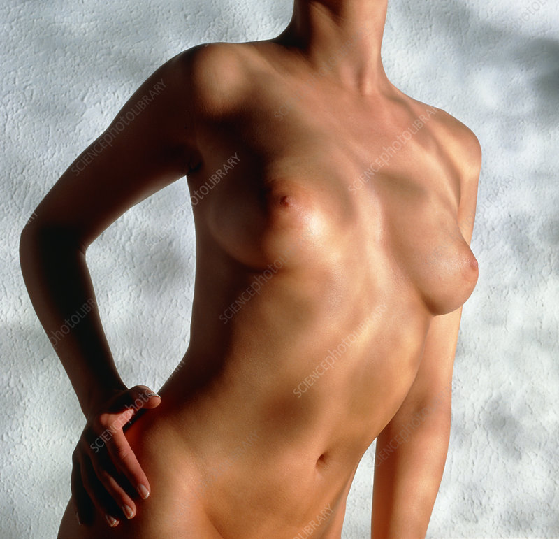 Front view of healthy woman's torso and breasts
