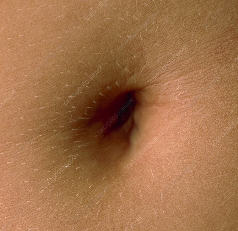 Close-up of the navel (belly button) of a woman