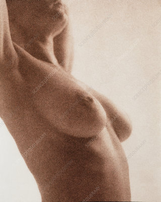 Side view of the naked torso of a woman