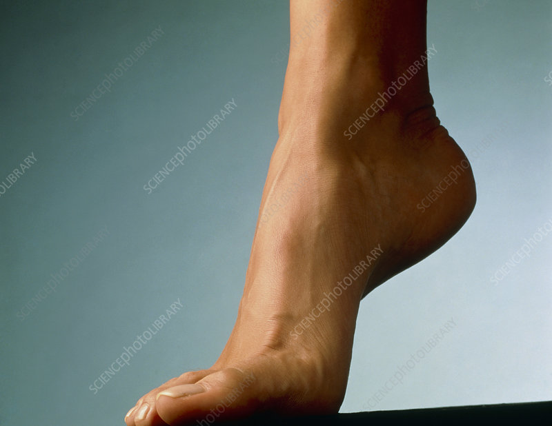 Healthy foot of a woman, raised onto its toes