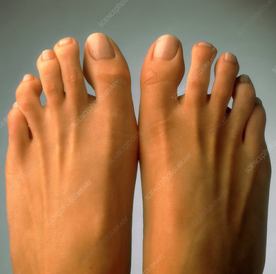 Top view of the healthy feet of a woman
