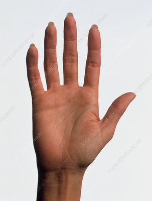 Hand of a woman seen palm-up with fingers straight